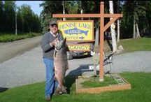 ALASKA FISHING SPECIALS!!! / Guided Alaska Sport Fishing Charters on the Kenai River, Kasilof River or Cook Inlet.  Serving Kenai, Sterling and Soldotna on the Kenai Peninsula.  www.deniselakelodge.com/hot-deals---alaska-fishing-packages.html  www.deniselakelodge.com/fishing-vacation-packages.html