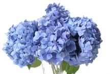 X flores X