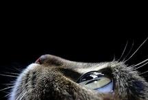 Cats vs human / catversushuman.blogspot.com