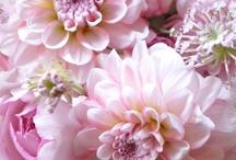 Fiori / Fiori ma anche vasi decorazioni ghirlande piante da fiore dettagli di fiori petali giardini in fiore