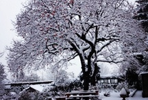 Autunno / Inverno / Mi ricorda l'autunno e l'inverno