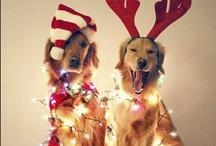 Christmas  / by Brenna Dawson