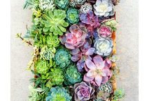 Grow / Planty places and gardening tips.  / by Marlene || Jade and Fern
