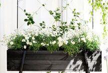 Potager / French kitchen garden inspiration.