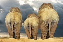 safari / {wild life} / by Anna Atkinson