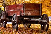 """Fall/Harvest / """"Autumn...the year's last, loveliest smile."""" ― William Cullen Bryant"""