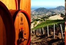 Sardinia Italian Wine Region -  Vino della Sardegna / Italian wines and Liqueurs from the region of Sardinia. Sharing with you all types of wines and related information from the varieties of grapes to the lovely vineyards  and the production of wines in Sardinia. If you would like to join us sharing your favorite flavors please add a comment to one of the pins below and I will sort it as soon as possible. Chin! Chin!
