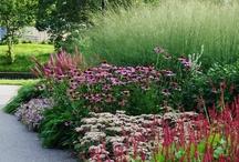gardening / by Bonnie Sladek