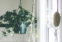 ROŚLINY /PLANTS by Pakamera / Tablica dla wielbiciela roślin, wypełniona po brzegi donicami, plakatami i gadżetami.