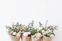 FLOWERS / Pretty Flowers