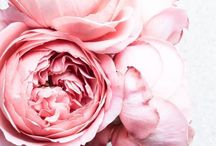 """love to smell  / """"sometimes we need to stop and smell the roses."""""""