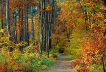Fall Travel Getaways / Fall Getaways - Ideas for travel and vacation in the fall - with or without the kids.