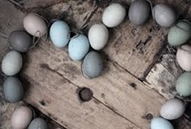 egg & chickens,nest & birds
