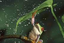 Frogs / by Inspiration Green