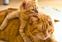 Critters ~ Felines! / Cats ~ Kittens!  What's NOT to love? / by KJ Giardino