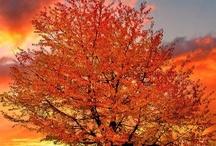 Fall / by Traci Knight