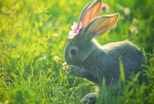 Easter Hunt 7 / by Shirley Parker