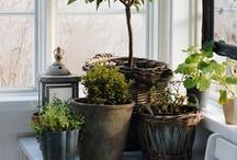 indoor garden inspiration