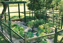 Garden Fresh / Inspiration for your summer gardening.