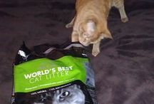 We Love Our Fans! / We love to see you and your cats enjoying World's Best Cat Litter! For a spot on this board, simply snap a photo with a bag of World's Best Cat Litter or just of your cat, tell us what you and your cats love about our product using #worldsbestcatlitter, and we'll repost!