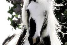Horses Horses Horses / by Sheila Beatty