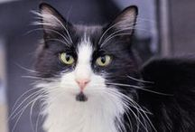 Adoptable Cats at SF SPCA / Meet our cats available for adoption at the Mission Campus and Pacific Heights Campus!
