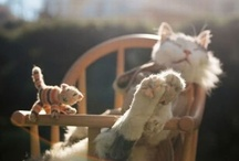 """Kitty Cats / """"A cat's eyes are windows enabling us to see into another world."""" - Irish Legend"""