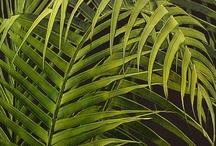 Plants / by Andrea Moreno