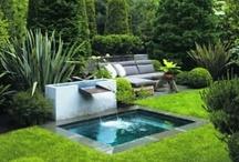 Garden & Back Yard