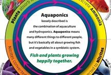 aquaponic & hydroponic
