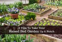Gardening ideas / by Jon and Steph Lee