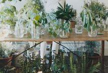 Horta e Jardim / by Ana Silveira
