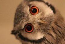 OWLS / Www.debistonewall.origamiowl.com / by Debi Stonewall