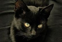 """Shadow & Other Beautiful Black Cats / My very special kitty """"Kage"""" (which means """"Shadow"""" in Japanese) lived with me for all of her twenty-two years.      Now, """"Shadow"""" lives on in my Milford-Haven Novels."""