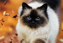 Cats and kittens / Cuteness of fluff
