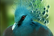 BIRDS / by Judith Lang