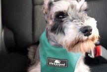 Dog Travel Safety