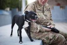 Working, Service & Military Dogs