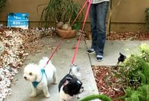 Leashes, Couplers, Dog Walking / Top Dog believes in walking safely and that walking should always be a fun, safe, bonding experience with your dog. We offer a wide variety of leashes to solve all of your walking needs. http://www.keepdoggiesafe.com/accessories.html