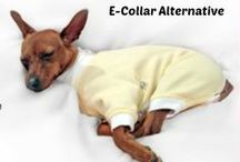Dog Care - First Aid  Flea & Tick