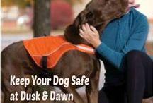 Keep Doggie Safe - Tips!