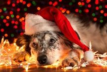 Dog Christmas Store / These Items Are Perfect for Any Dog or Dog Lover! These items are pratical and fun and will put a smile on any dog or dog owner when they open the present Santa Cruised the Site with Wrigley and selected these Customer Favorites