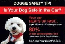 Dog Safety Tips