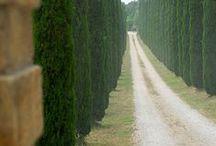 ~ tree ~