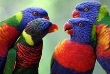 Birds, Beautiful Birds / by Sandy (Girlyfrog) Eyler