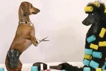 It's not a wiener...it's a haute-dog / Dachshunds  / by Ahhh Kat