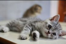Cats♥ / My favorite animals!
