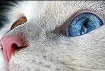 Odd-Eyed Cats / by Denise Tucker