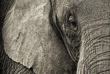 Elephants♥ / by Kelsey Buri