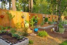 Gardening & Urban Homesteading / Ideas and methods for gardening and urban homesteading (and bee keeping).